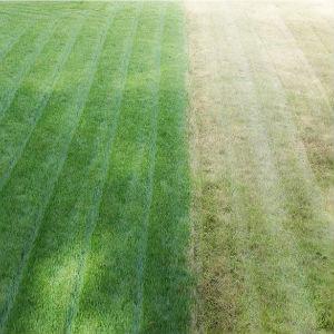 grass-cutting-services